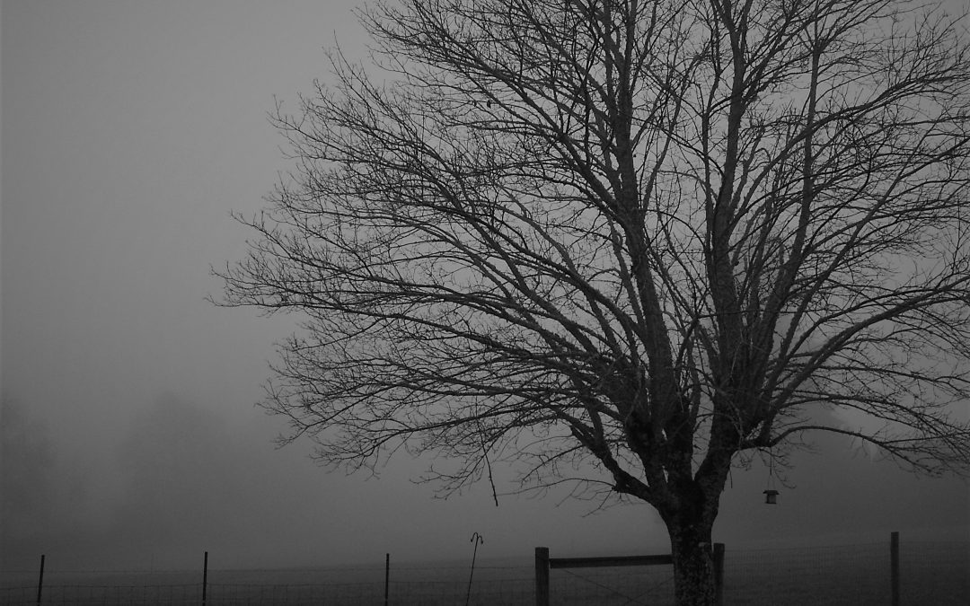 Foggy day with lone tree without leaves standing in field.