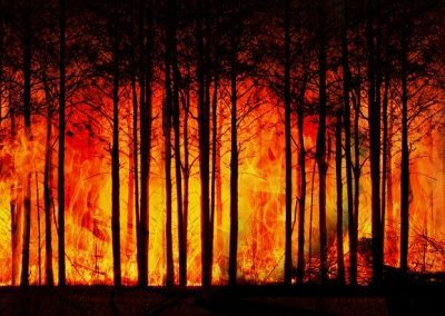 Forest trees engulfed in flames.