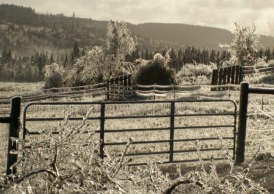 scenery of ice collected on fencing and trees.